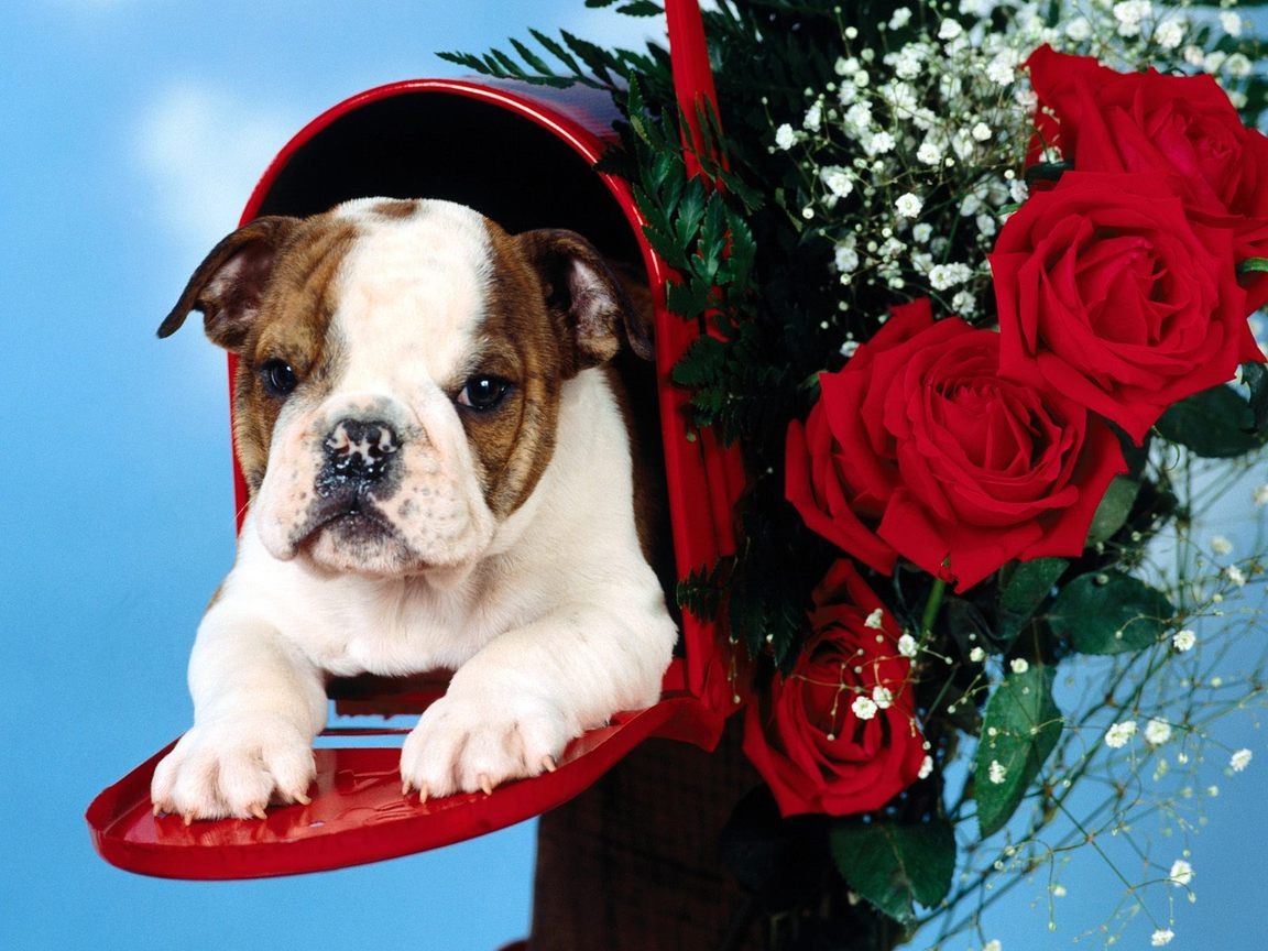Puppies Wallpapers Beautiful Dogs Wallpapers
