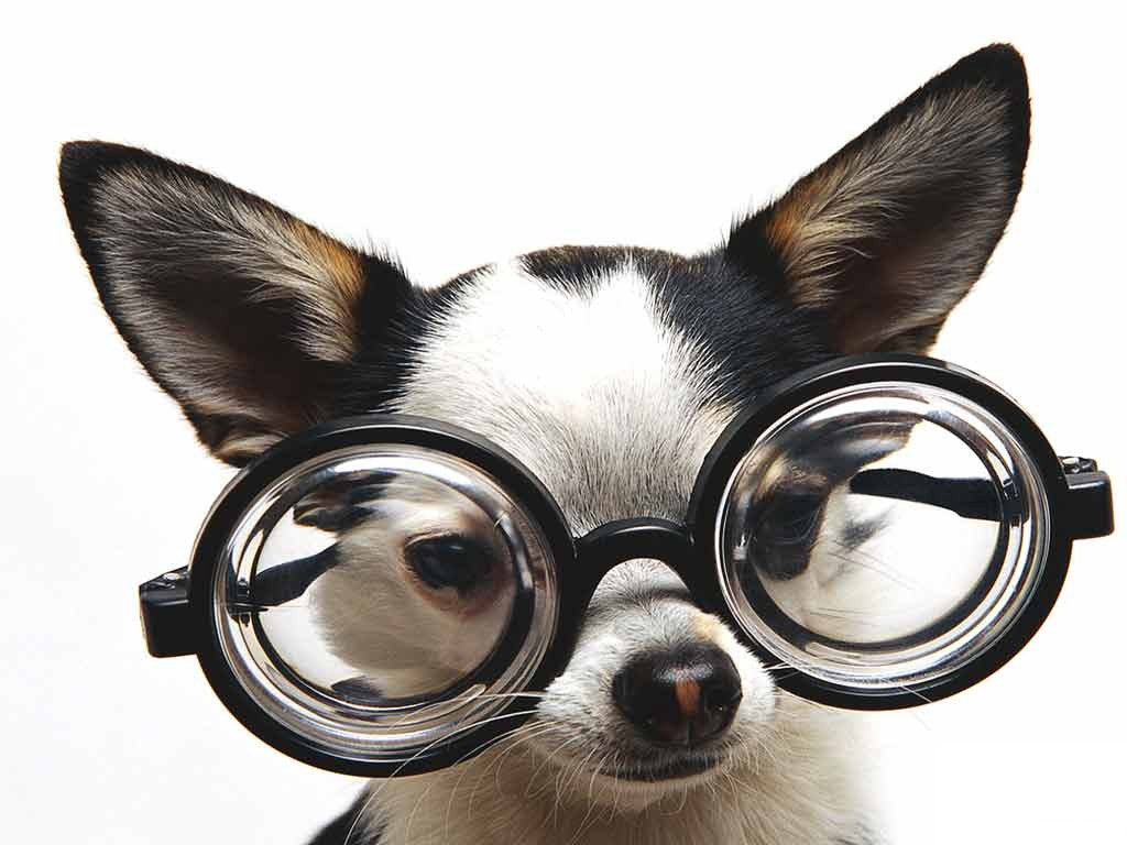 dog with thick glasses
