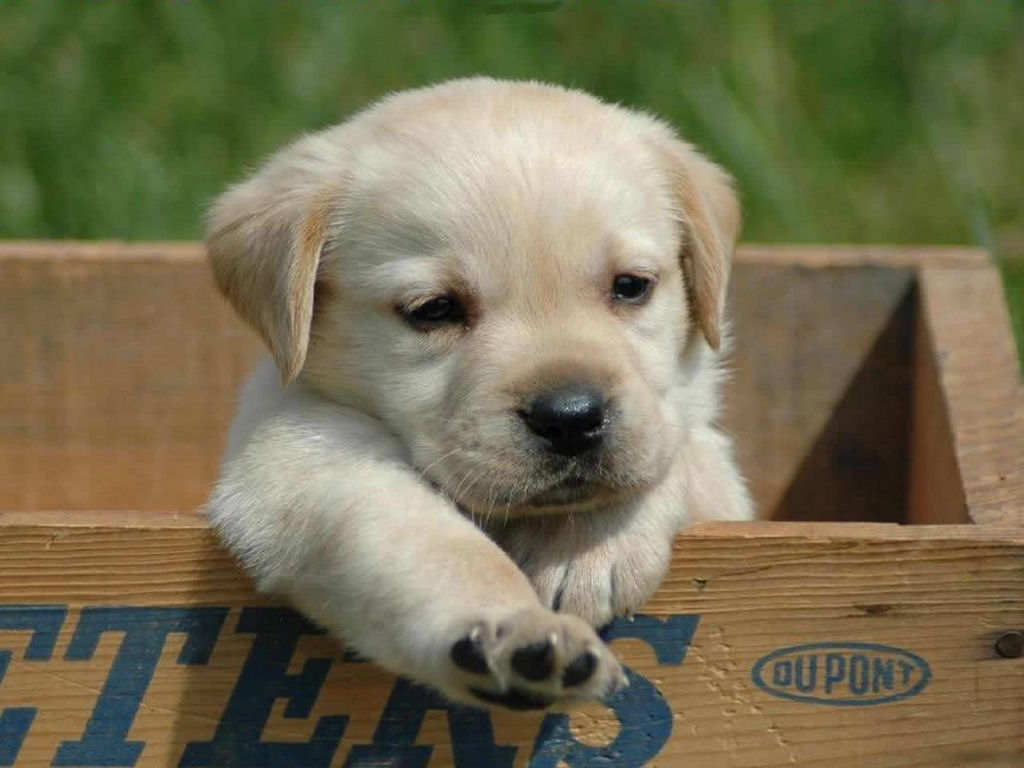 cute puppy picture - photo #11