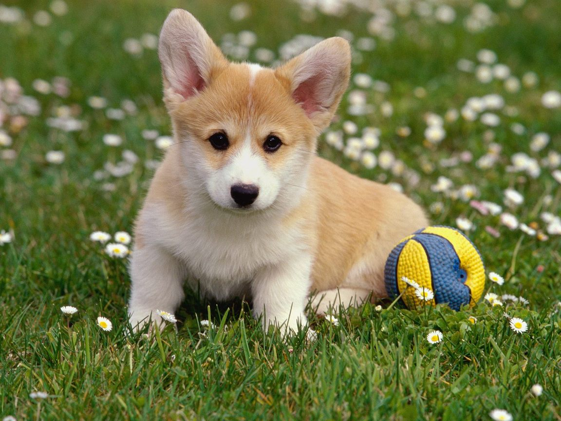 Lovely Puppy Wallpaper Enlarge Wallpaper and Download